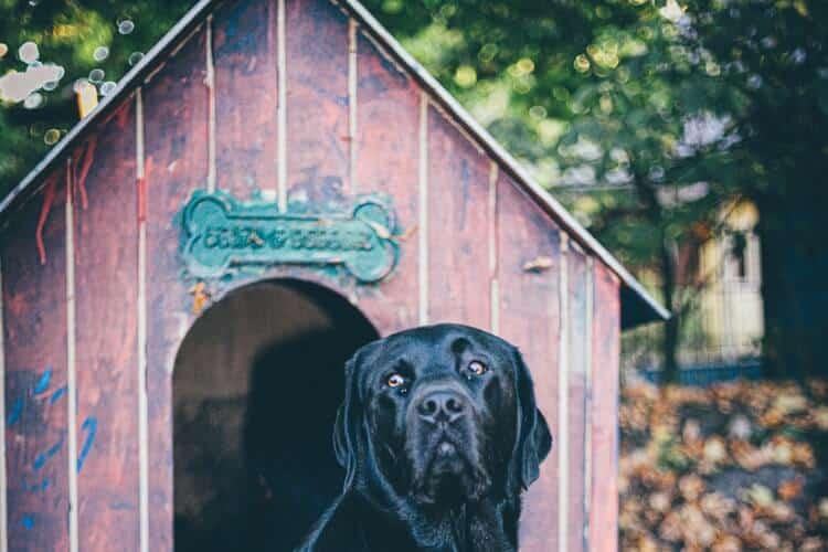 plan de construction d'une niche pour chien