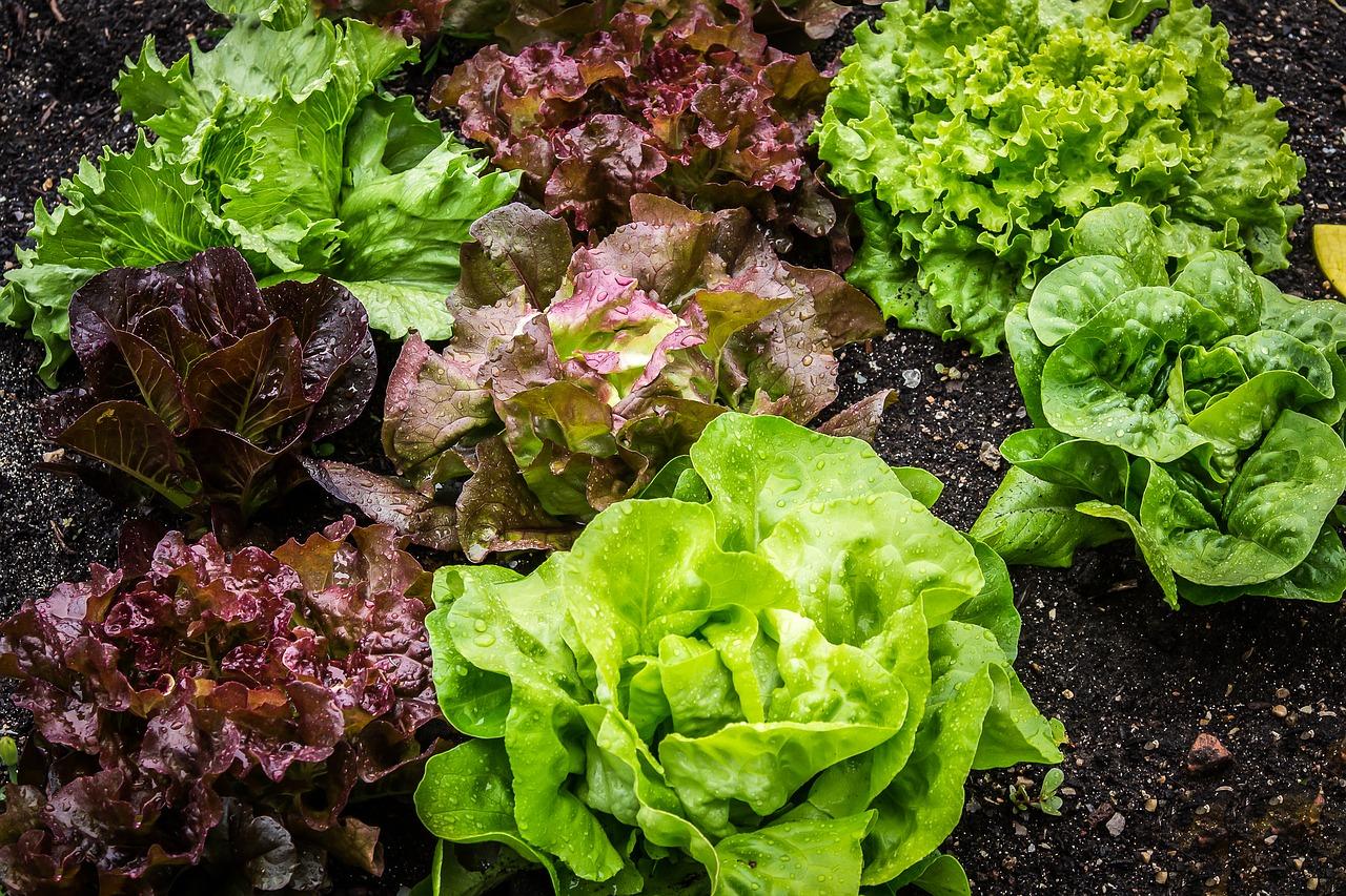 légumes à feuilles